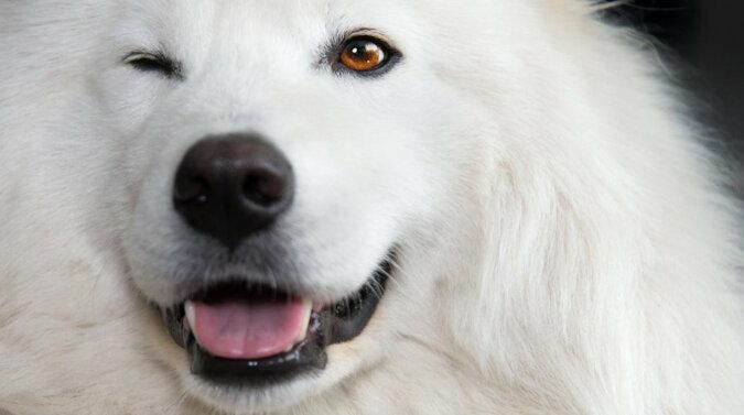 """Jakiego koloru były psy? Dwa psy znalazły """"idealne miejsce"""" do zabawy. Wideo"""