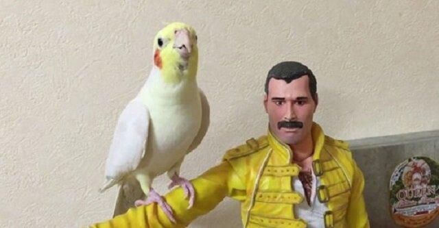 Melodyjna papuga wykonuje piosenki Queen, siedząc na ramieniu lalki Freddiego Mercury'ego. Wideo