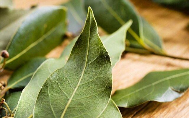 Ukryte właściwości liści laurowych. Przekonaj się sam