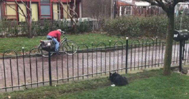 Pies tak bardzo nudził się sam na podwórku, że wymyślił genialną zabawę. To trzeba zobaczyć