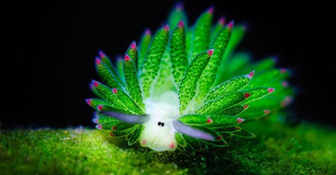 """Niesamowity """"baranek morski"""" - zwierzę i roślina jednocześnie"""
