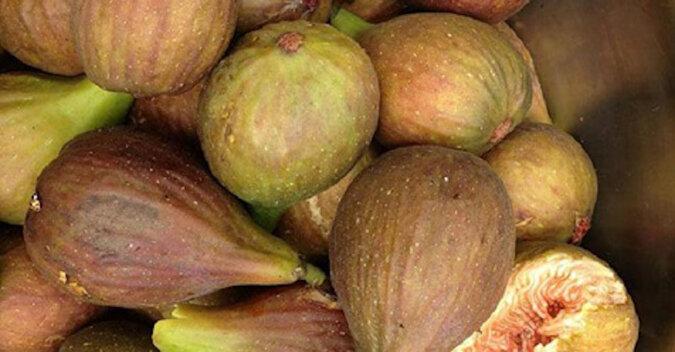 Nasi przodkowie wiedzieli o cudownych właściwościach tych owoców: 7 faktów o drzewie zdrowia i długowieczności