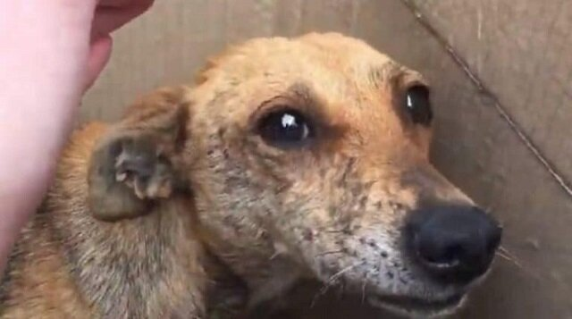 Zajrzawszy do pudełka, kobieta zobaczyła przestraszonego psa i chude szczenięta