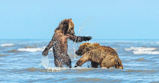 Niedźwiedzica przyprowadziła  młode na plażę. Ludzie na długo to zapamiętają