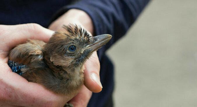 Ludzie uratowali umierające pisklę, które znalazło się obok łyżki koparki: ptak wrócił, żeby podziękować