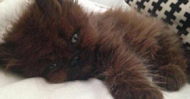 Kobieta przygarnia małego, chorego kotka. Rok później nie wierzy własnym oczom, co z niego wyrosło
