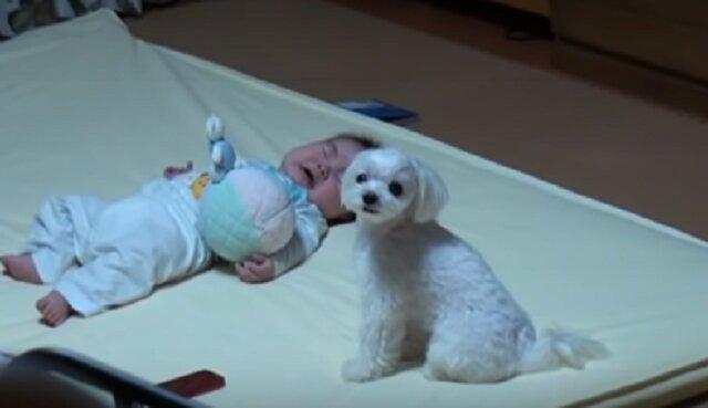 Matka położyła niemowlę na plecy, a obok znajdował się piesek. Nagranie, które udało się jej zrobić odebrało mowę