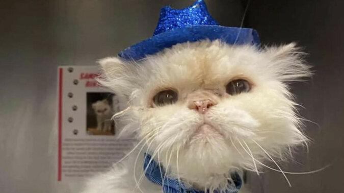 Kot obchodził swoje 19. urodziny: wygląda bardzo dobrze