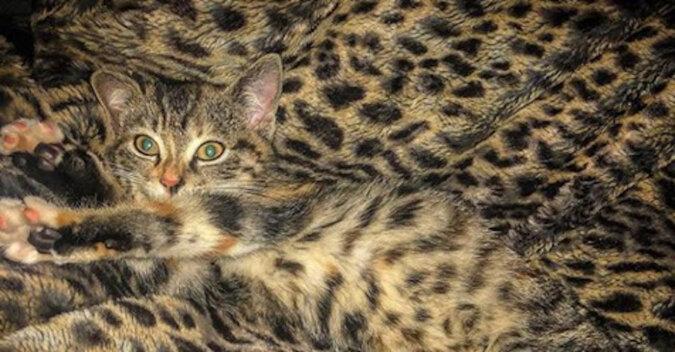 15 zwierząt, które są dosłownie stworzone do maskowania się w domu
