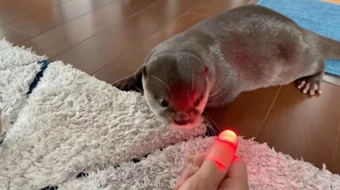 Reakcja wydry na sztuczkę z palcem rozbawiła użytkowników Internetu. Wideo