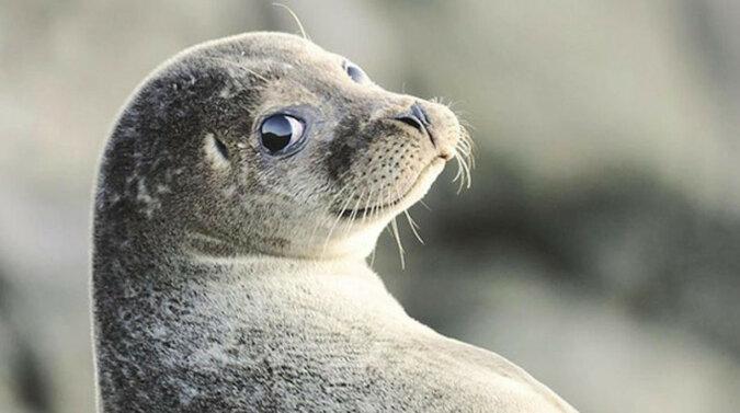 Brytyjscy prezenterzy telewizyjni śmiali się do łez, gdy foka w transmisji na żywo zaczęła robić coś niewyobrażalnego. Wideo