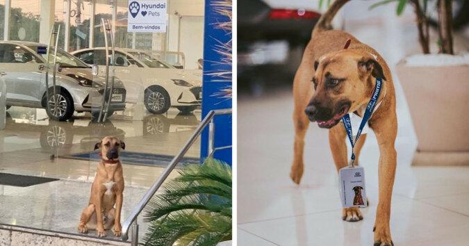 Pies został zatrudniony do pracy w salonie samochodowym i osiągną sukces