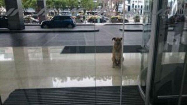 Nieznajoma nakarmiła bezdomnego psa. Jego wdzięczność jest cudowna