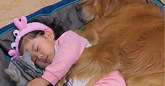 Urocze i wzruszające wideo przedstawiające małą dziewczynkę, która kładzie do łóżka psa i kota
