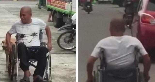 Pies skrada się za wózek inwalidy. Zdjęcia, które wywołują burzę