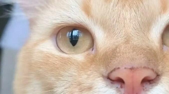Kot przerwał nagrywanie wideo dla sieci społecznościowych i zmienił filmik na lepsze - niesamowite