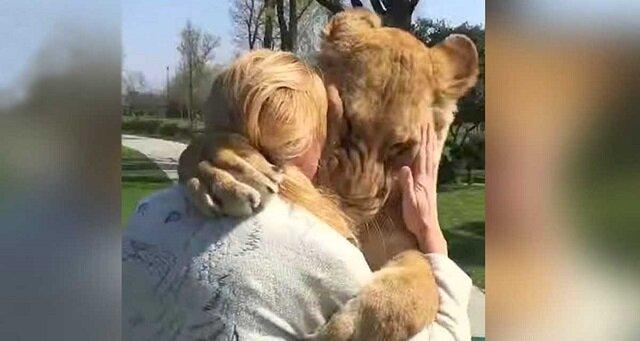 Wychowała dwa osierocone młode lwy, a następnie musiała wysłać je do zoo. Lata później spotkały się ponownie