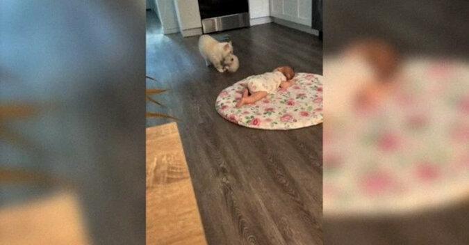 Najsłodszy filmik na świecie: kotka przyprowadziła kociaka na zapoznawcze spotkanie z córką właścicielki