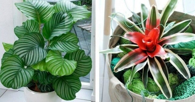 Które rośliny lubią cień. Zobacz