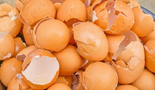 Niezwykłe użycie skorupek po jajkach w życiu codziennym: 4 ciekawe sposoby