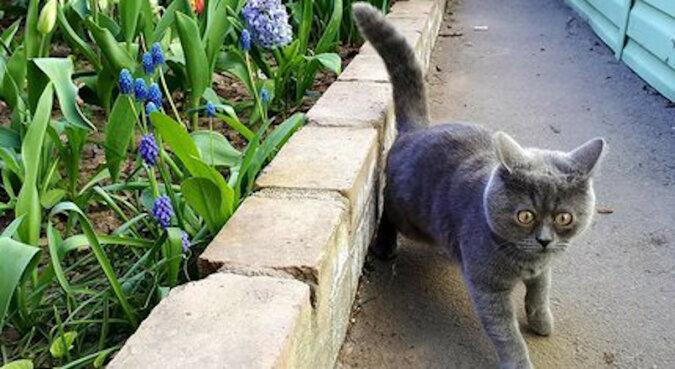 Zaskoczony kociak rozkochał w sobie cały świat - cud i opieka właścicielki pomogły mu przeżyć
