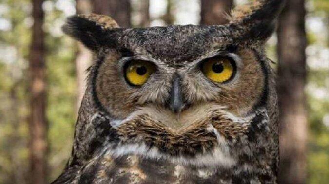 Ptak patron twojego miesiąca urodzenia powie ci kilka rzeczy o twojej wyjątkowości