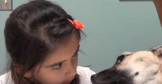 Dziewczynka popatrzyła się w oczy umierającego psa, to co stało się potem jest cudowne