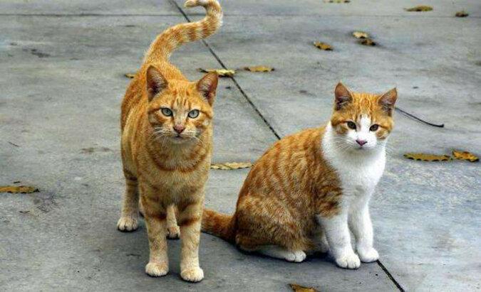 Amerykanin robi domy dla bezpańskich kotów z wyrzuconych minilodówek