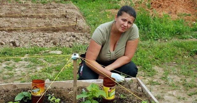 W dzień wypędziłam mrówki i mszyce ze swojego ogrodu. Sprawdzony sposób gospodarstw rolnych