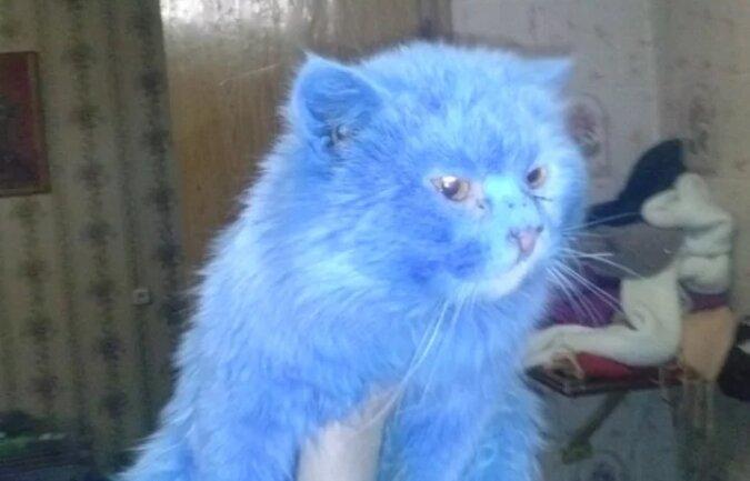 Dziewczyna znalazła niebieskiego kota w parku i nazwała go Avatar, ale wkrótce zaczął się bardzo zmieniać: po miesiącu kot był nie do poznania