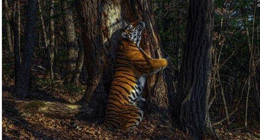 Zdjęcie rosyjskiego fotografa otrzymało główną nagrodę w kategorii Wildlife Photographer of the Year