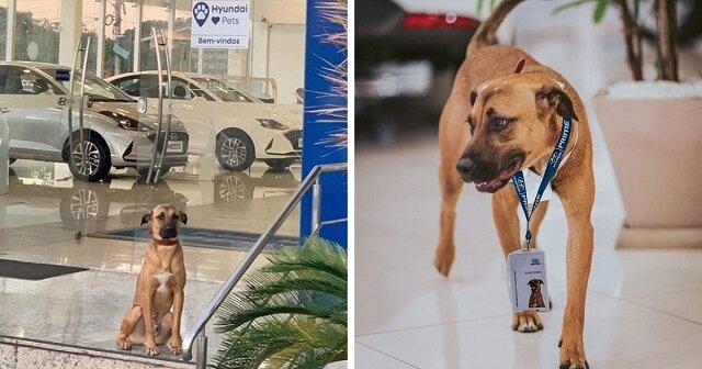 Bezdomny pies często pojawiał się w salonie samochodowym. Pracownicy zdecydowali się go zatrudnić