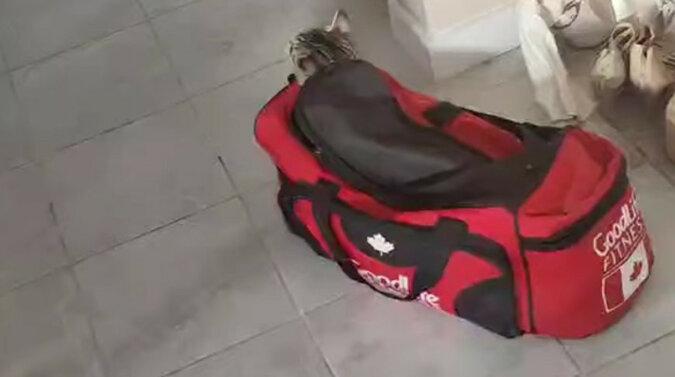 Zabrał najważniejsze: kot uwielbia bawić się w chowanego - wychodzi zabawne wideo