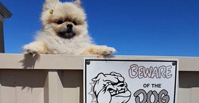 """Sytuacje, gdy na widok tabliczki z napisem """"Uwaga! Zły pies!"""" jesteś naprawdę oniemiały"""