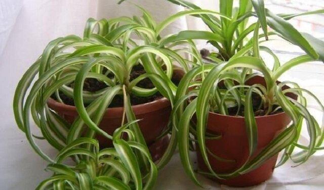 Top 7 roślin doniczkowych, które warto mieć w domu. Zobacz dlaczego