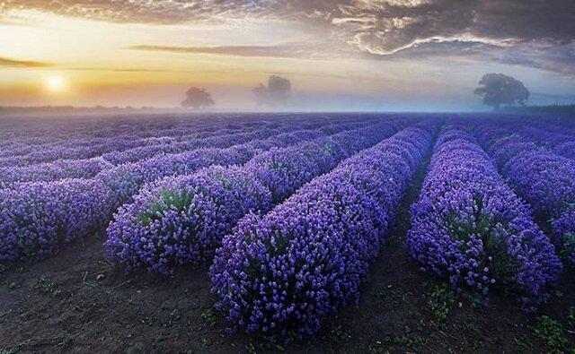 Niesamowity wybór zdjęć niezwykle pięknych cudów natury