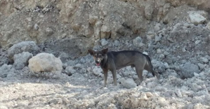 Pies przeprowadził nieznajomego w góry, aby uratować pozostawione tam dziecko