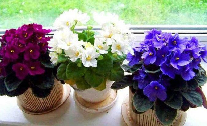 Trzy proste sztuczki potrzebne dla tego, aby rośliny doniczkowe były zdrowe i piękne. Na pewno ożyją i zakwitną