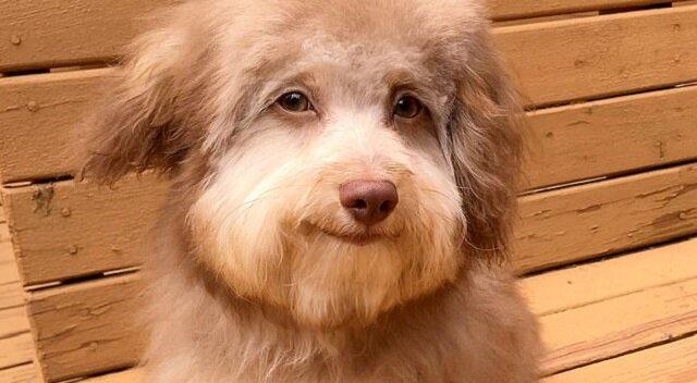 Pies Nori z ludzkimi oczami i uśmiechem - nowy bohater Internetu