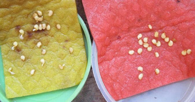 Jak wykiełkować przeterminowane nasiona papryki
