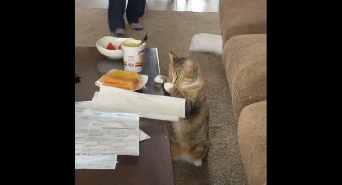 Higiena przede wszystkim: kot umył łapy przed kradzieżą jedzenia od właściciela i rozbawił wszystkich. Wideo
