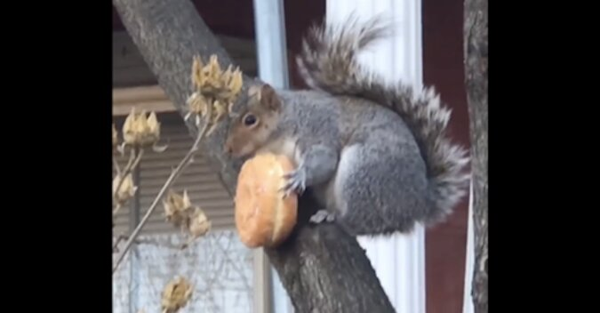 Wiewiórki, które rozśmieszą cię. Wideo
