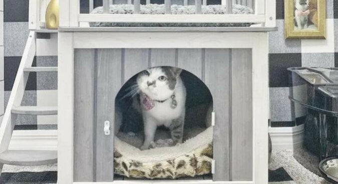 Właściciele zbudowali dla kotki wspaniały dom znajdujący się już w domu