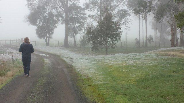 W Australii rozpoczął się sezon pająków. Wygląda to przerażająco