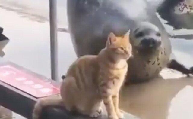 Foka próbowała zaimponować obojętnemu kotu, ale bezskutecznie. Wideo