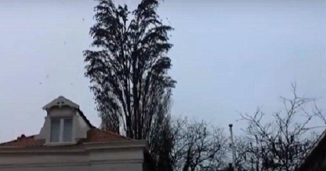 Nie spuszczaj oka z tego drzewa za chwilę stanie się coś niesamowitego