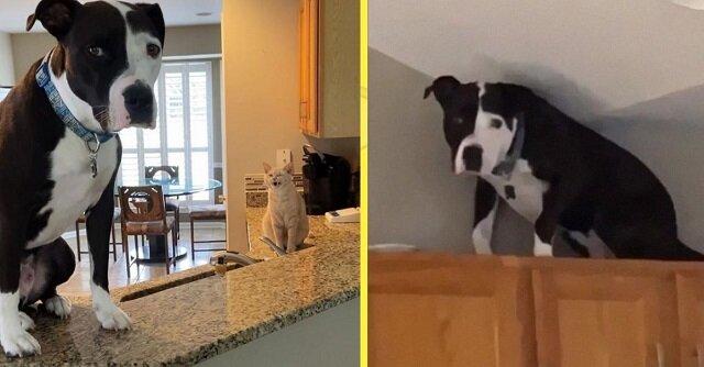 Uratowany pies nie chce uwierzyć, że jest psem