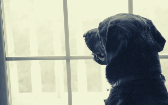 Dlaczego pies codziennie godzinami wyglądał przez okno i nigdy nie odchodził?