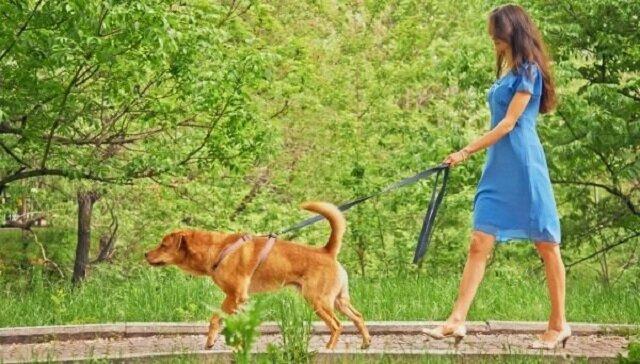 Mąż zaczął coś podejrzewać, kiedy jego młoda żona zaczęła codziennie wychodzić z psem. Poszedł za nią i zdał sobie sprawę, jak bardzo się mylił