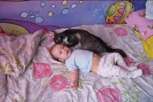 Dziecko nie może przestać płakać. Zobaczcie, co się dzieje, gdy dostrzega je ta kotka. Nie uwierzycie